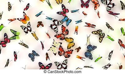 papillons, fond