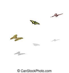papillons, isolé, blanc, fond
