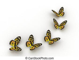 papillons, isolé, blanc