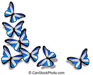 papillons, isolé, drapeau, fond, écossais, blanc