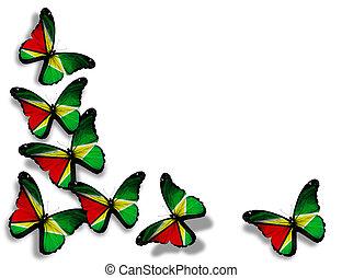 papillons, isolé, drapeau, fond, guyane, blanc