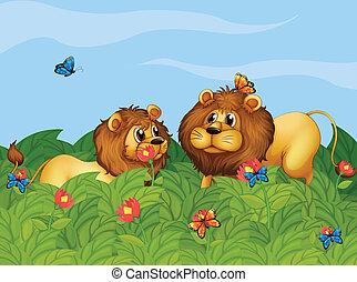 papillons, lions, jardin, deux