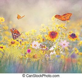 papillons, pré