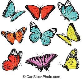 papillons, vecteur, ensemble, coloré