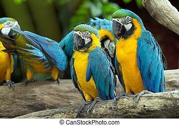 papoušek, ptáček