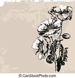 papoula, flores, grunge, fundo