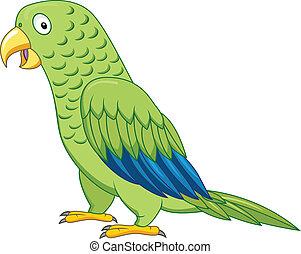 pappagallo, verde