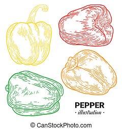 Paprika pepper fresh food vector hand drawn illustration, drawing, engraving, ink, line art, vector.