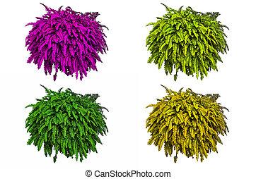 Doniczkowy Paprocie Wibrujący Pots Zielony Paprocie