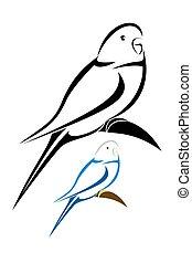 papuga długoogonowa