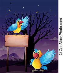 papugi, dwa, opróżniać, deska