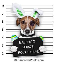 paques, chien, mugshot