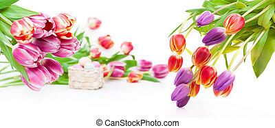 Paques, oeufs, bannière, tulipes