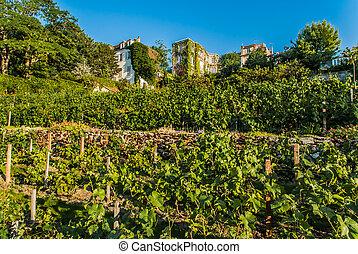 parís, ciudad, montmartre, viña, francia