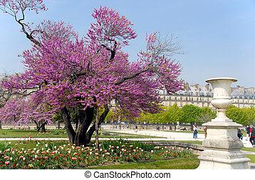 parís, primavera