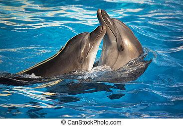 par, av, delfiner, dansande