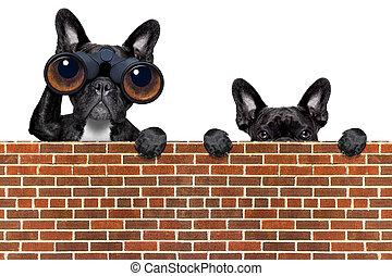 par, chien, jumelles, regarder