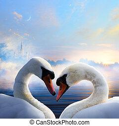 par, de, cisnes, apaixonadas, flutuante, ligado, a, água, em, amanhecer, de, a, dia