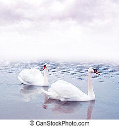 par, de, cisnes, flotación en el agua