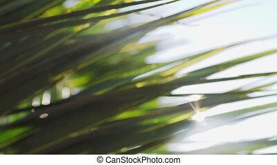 par, foliage., shines, arrière-plan., leaves., frais, palmier, naturel, soleil, été, exotique, vert