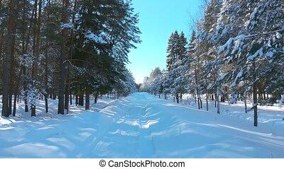 par, forêt, mouvement, hiver, pin
