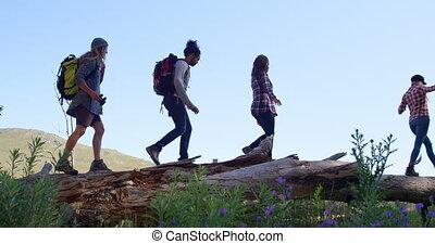 par, forêt, randonnée, 4k, groupe, amis