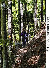 par, groupe, forêt, randonnée, touristes