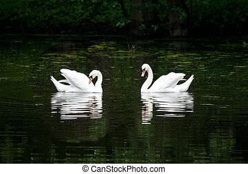 par, lago cisne, floresta