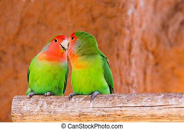 par, papegøjer, branch