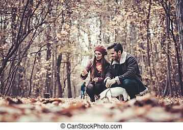 par, parque, passeio cachorro, outono, tendo