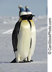 par, pingüim, bonés