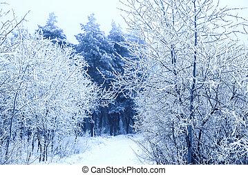 par, route, neigeux, surgelé, hiver, mystérieux, noël, ...