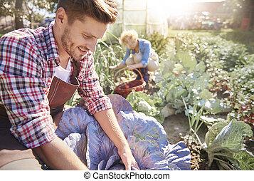 par, skörda, grönsaken, in, solig, trädgård