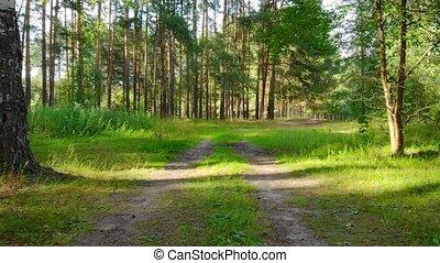 par, terre, russe, forêt, piste, désert