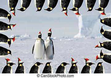 par, xmas, cartão, pingüim