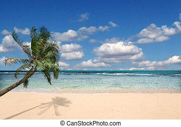 paraíso, playa, con, nadie, alrededor
