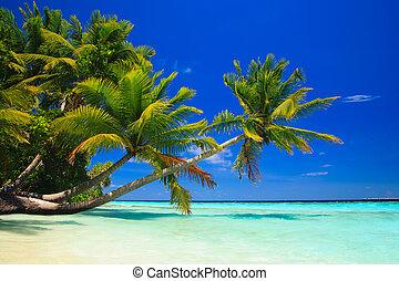 paraíso tropical, en, maldivas