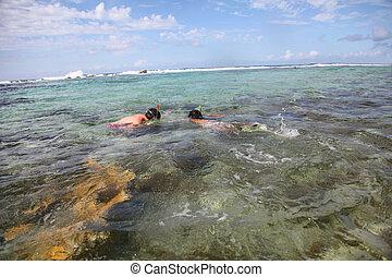 para, karaibski, wody, snorkeling