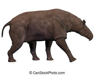 paraceratherium, branca