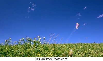 Parachute flies above meadow - parachute flies above green...