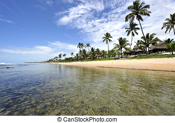 paradicsom, tengerpart, alatt, brazília