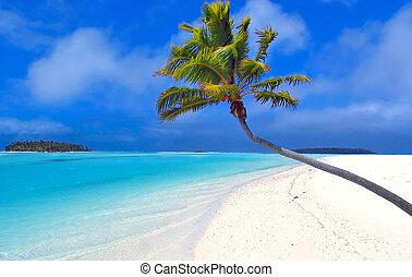 paradijs, palm