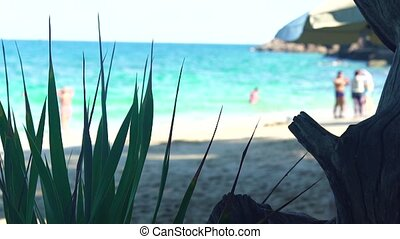 Paradise beach and beautiful blue sea. turquoise sea water and sandy beach. Green plants on tropical beach and ocean landscape.
