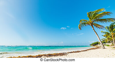 Paradise beach on a sunny day in Guadeloupe