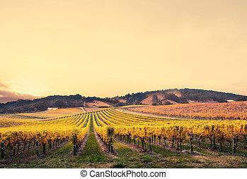 Paradise - Gorgeous Sunset over a South Australian vineyard