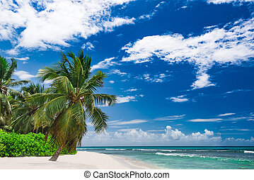 paradise resort beach palm tree sea Dominican Republic -...