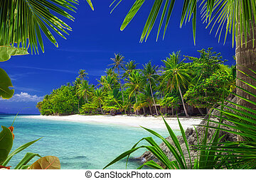 paradise - View of nice tropical beach with some palms ...