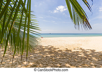 Paradisiac beach of Koh Phi Phi in Thailand