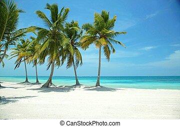 Paradisiac beaches of Punta cana in Dominican republic