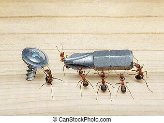 parafuso, chave fenda, formigas, carrega, trabalho equipe, ...